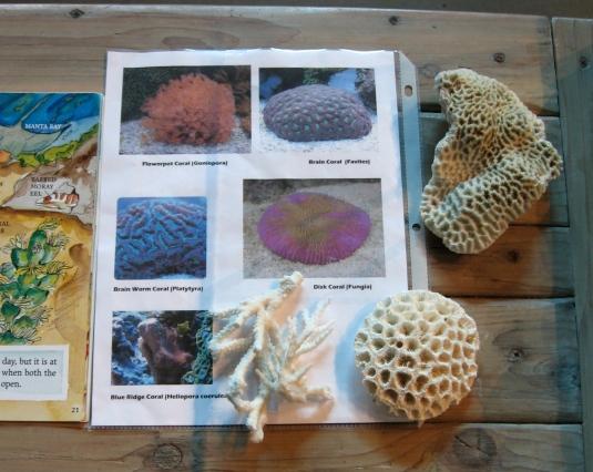 brain coral, brain worm coral